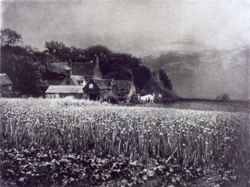 The Onion Field', George Davison, 1890